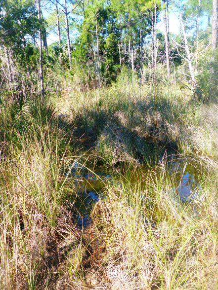 Wet marsh.jpg
