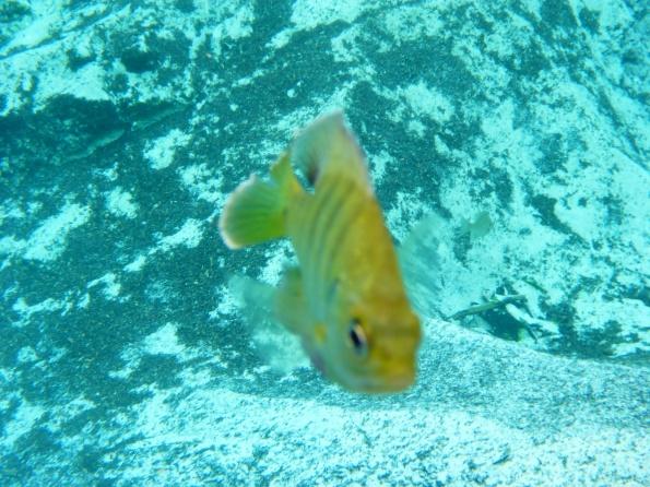 fishface2