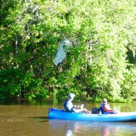 Boat stuck in tree