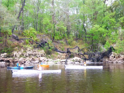Epics and bluffs at the Suwannee Launch