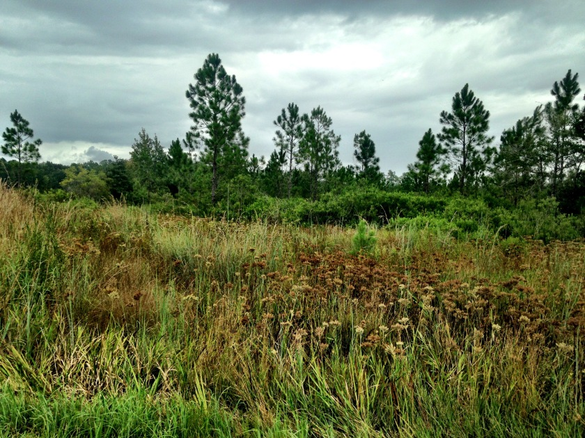Grasses in Rice Creek Conservation Areas