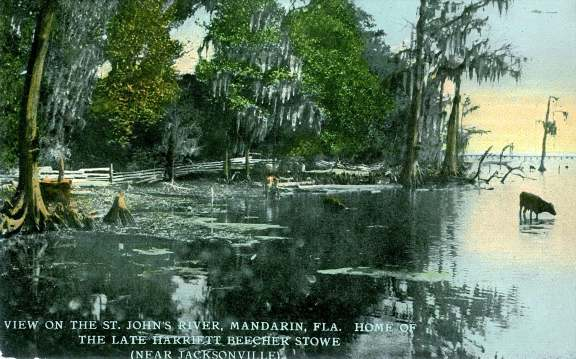 View On the St. Johns River_Mandarin Fla._Home of the Late Harriett Beecher Stowe_Near Jacksonville.jpg