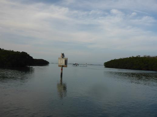 Caladesi Ferry