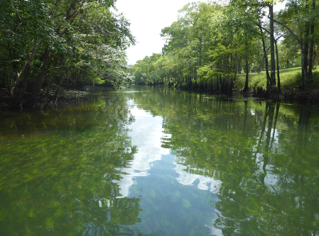 Placid waters on Holmes Creek